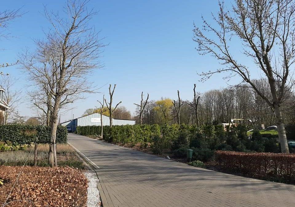 Bomenverzorging